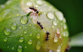 Как разводить муравьев в домашних условиях