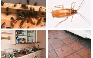 Как морить тараканов в квартире