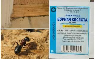 Как избавиться от муравьев древоточцев в деревянном доме