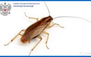 Травля тараканов как называется эта работа