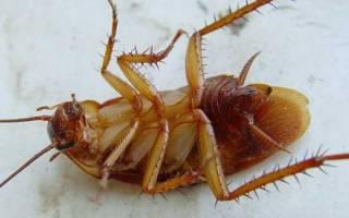 Белизна от тараканов