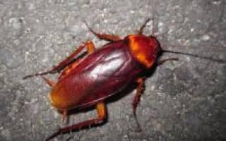Рубит средство от тараканов