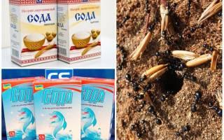 Как избавиться от муравьев с помощью соды