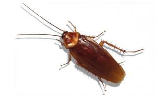 От чего появляются тараканы в доме частном