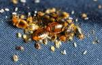 Как избавиться от клопов и тараканов