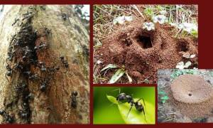 Как уничтожить муравьев на садовом участке