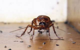 Как правильно травить тараканов в квартире