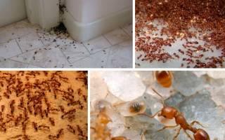 Чем в домашних условиях вывести муравьев