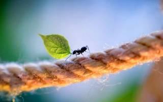 Чем полезны для человека муравьи