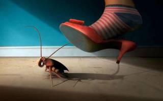 Тараканы от соседей что делать