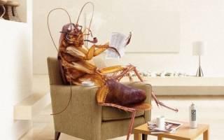 Ловушки от тараканов самые эффективные