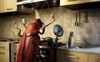 Все о тараканах и как от них избавиться