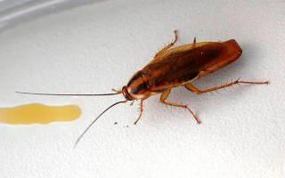 Гель от тараканов лучший