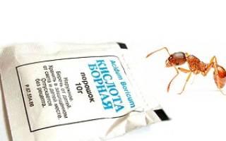 Борная кислота и муравьи что происходит