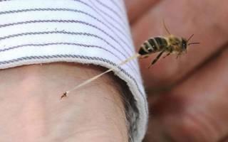 Что происходит с пчелой после укуса