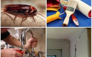 Как истребить тараканов в квартире
