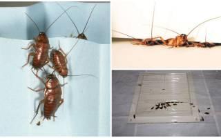 От соседей ползут тараканы куда жаловаться