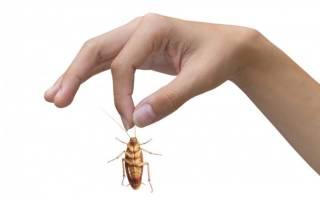 Виды тараканов в квартире и как с ними бороться