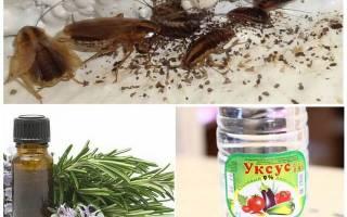 Как без химии избавиться от тараканов