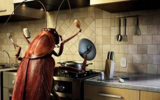 Как можно избавиться от тараканов в квартире навсегда