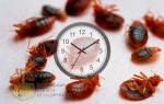 Как долго живут клопы без еды
