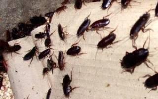 Запах от тараканов