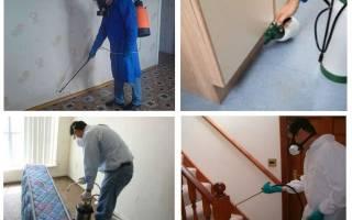 Как проходит обработка от клопов в квартире