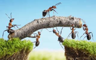 К чему во сне муравьи