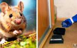 Комплексная обработка здания от тараканов крыс мышей