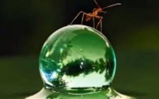 К чему муравьи в доме примета