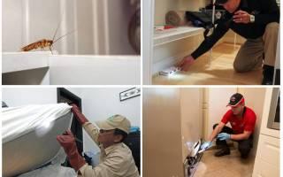 Профессиональное средство от тараканов самое эффективное