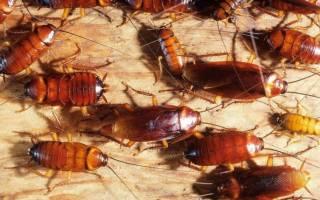Как лучше травить тараканов в квартире