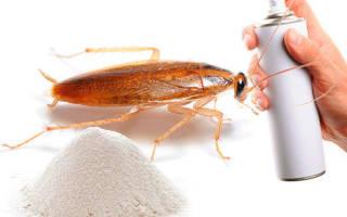 Как можно уничтожить тараканов