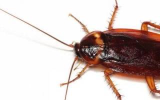 Дезинфекция помещений от тараканов