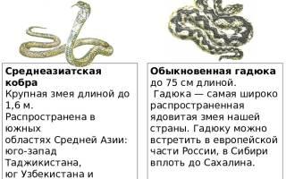Укусы клещей насекомых змей презентация школьникам