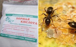 Как борной кислотой потравить муравьев