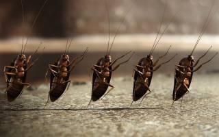 Электроприбор от тараканов