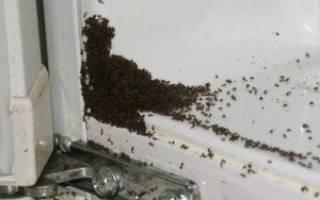 Как истребить муравьев