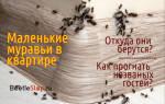 Откуда берутся муравьи в квартире и как от них избавиться