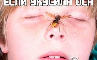 Укус в голову осы
