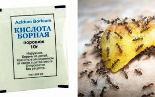 Как вывести муравьев из дома борной кислотой