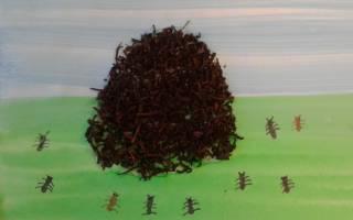 Что несут к муравейнику муравьи