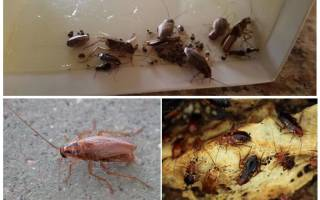 Польза от тараканов