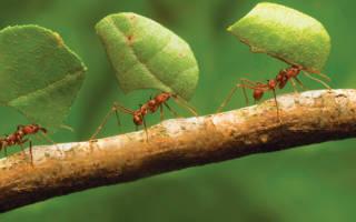 Как вывести муравьев из парника