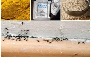 Как избавиться от муравьев в дачном доме