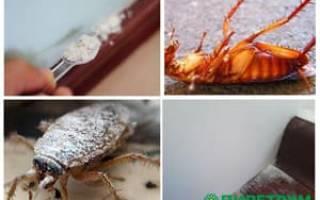 Серый порошок от тараканов