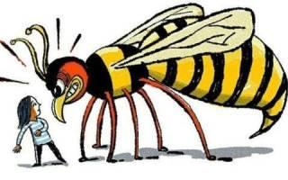 Что делать в домашних условиях при укусе осы