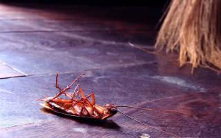 Аверфос от тараканов