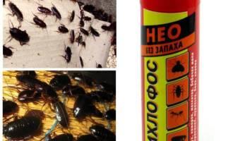 Как дихлофосом травить тараканов в квартире