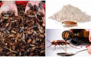 Польза от тараканов какая